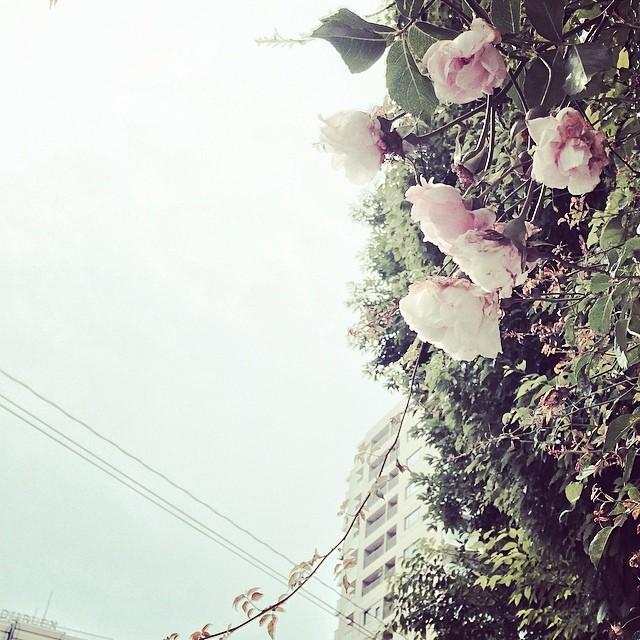 花も暑くて限界だって。 from iPhone