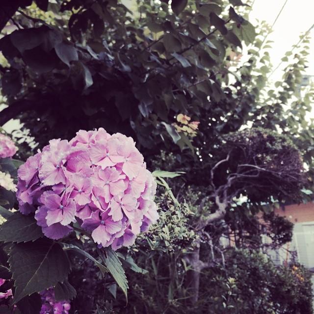 今日のモーニングフラワー。撮影は午前5時。 from iPhone