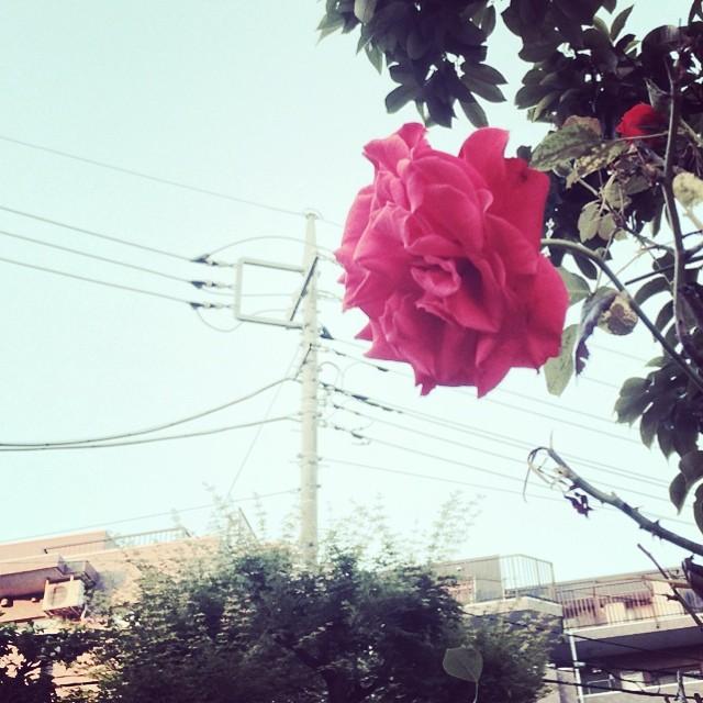 迷い道に赤い花。 from iPhone