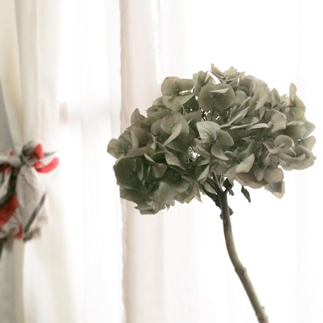トコリエさんで買った紫陽花。ドライになってきた(なった?)。 from iPhone